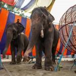 ichtv_20190407_ZDF_Lion-Circus_029_DSC_9106_2000