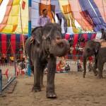 ichtv_20190407_ZDF_Lion-Circus_031_DSC_9183_2000