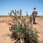 Der Zyklon Idai (März 2019) hinterließ auch auf den Feldern schwere Verwüstungen. Die Wassermassen hinterließen eine äußerst dicke Sediment-Schicht. Die Felder sind kaum bestellbar –schweres Gerät ist nötig, um die steinharte Schicht zu durchdringen. Aber das ist nicht das einzige Problem für die Landwirte: absinkende Erdschichten hinterlassen große Krater und erschweren die Arbeit noch zusätzlich.Die ausgedörrten und verkraterten Felder der drei Landwirte befinden sich in Estaquinha, Provinz Sofala. Die Bauern heißen Joaquin Manuel, Lucas Mutumana und Manuel Ziwa.